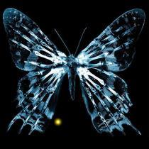 600px-ButterflyGlyph