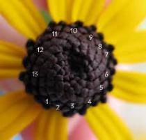 fibonaci 1
